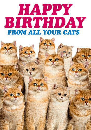 Dean Morris Card All Your Cats
